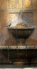 Seasons Fountain with gold finches