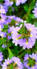 Purple abundance!